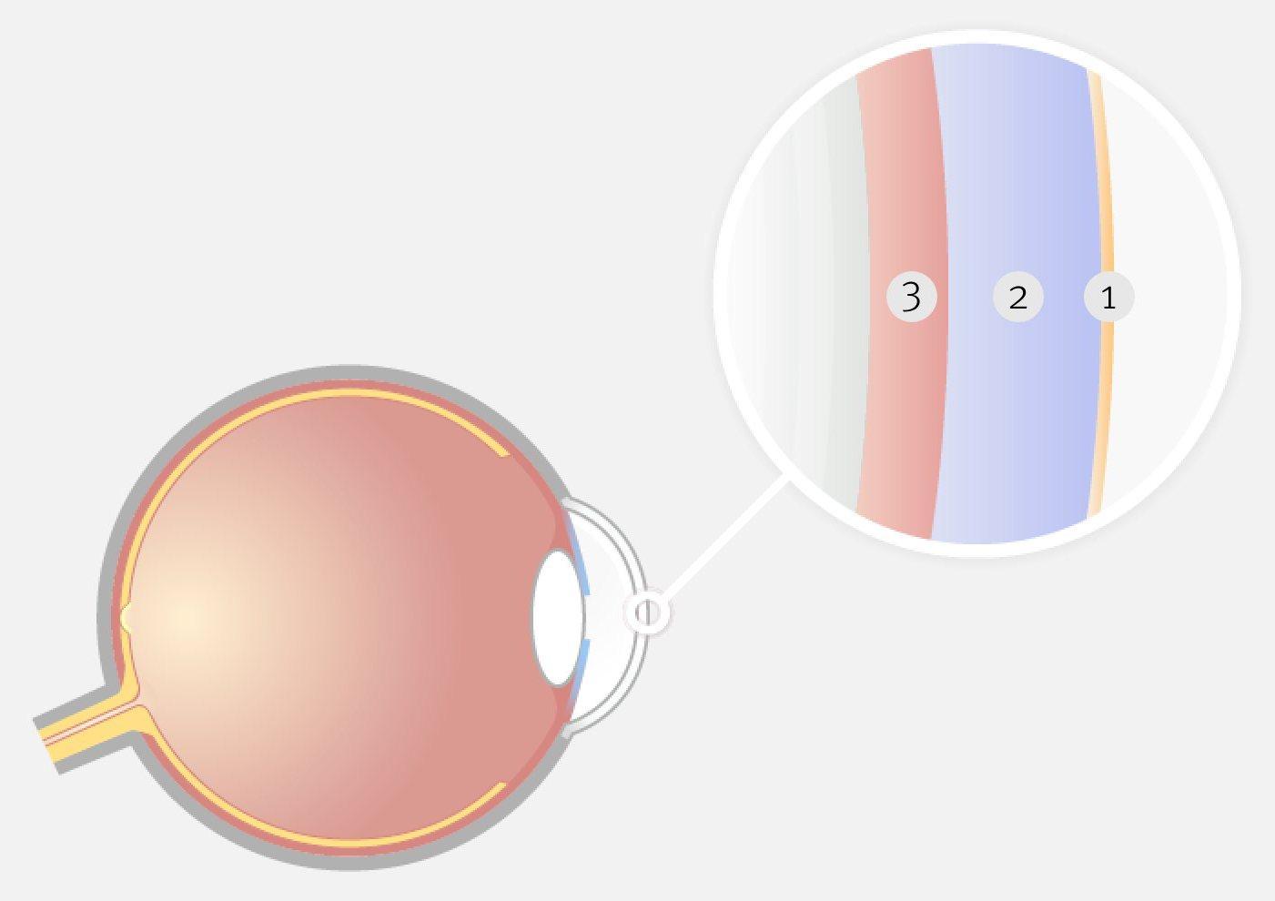 Grafische Darstellung des Auges mit einer vergrößerten Darstellung des Tränenfilms im Querschnitt.