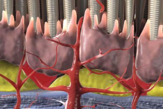 Teaserbild [Echo] Feuchte Makuladegeneration Auswirkungen und Ursachen